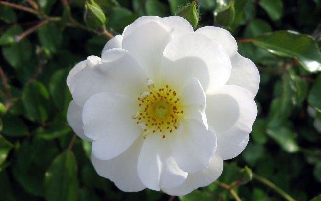 fotos-flores-brancas